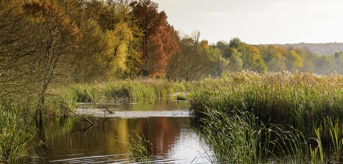 Obiective din jurul Bucurestiului: Delta Neajlovului si Parcul Natural Comana