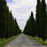 Celebrele drumuri toscane sunt in general inchise. Exista si exceptii