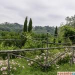 Toscana in toata splendoarea sa