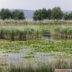Lacul Bugeacului