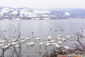 Lacul Batca Doamnei, Piatra Neamt